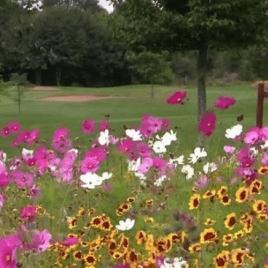 Aurora Annual Colour Splash Wildflower Mixture (50g)